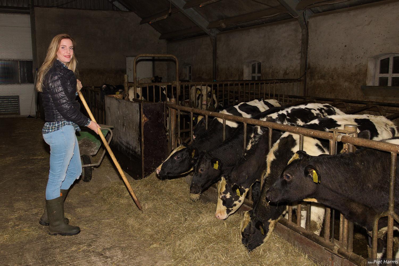 Harmke de Ruiter harkt het voer bijeen voor de koeien.
